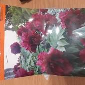 Пионы корневища, розы